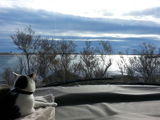 chat et camping-car