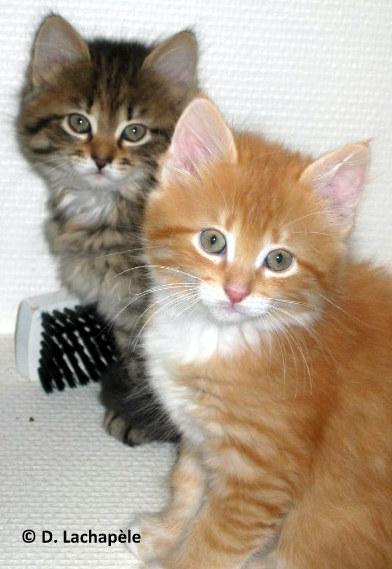 11 ans datant salles de chat